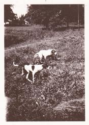 Granddads Hunting Dogs